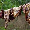 Carne seca,Creel, Mexico
